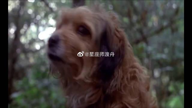 催泪影片:流浪狗给猎豹当妈妈,为了给它们觅食,跑去偷猎人的鸡