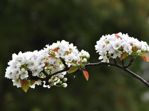 十月下旬月老千里送姻缘,桃花大势盛开,想不脱单都难的四大生肖