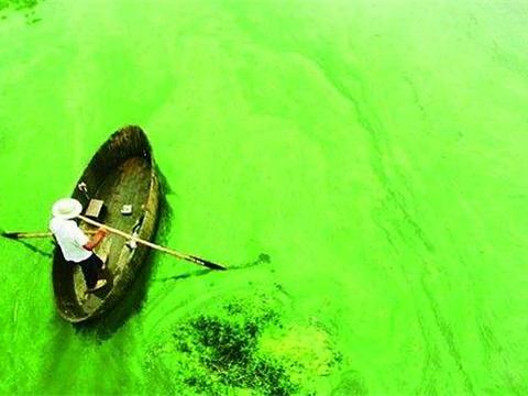 出现蓝藻是补磷还是控磷 控制蓝藻就要控磷
