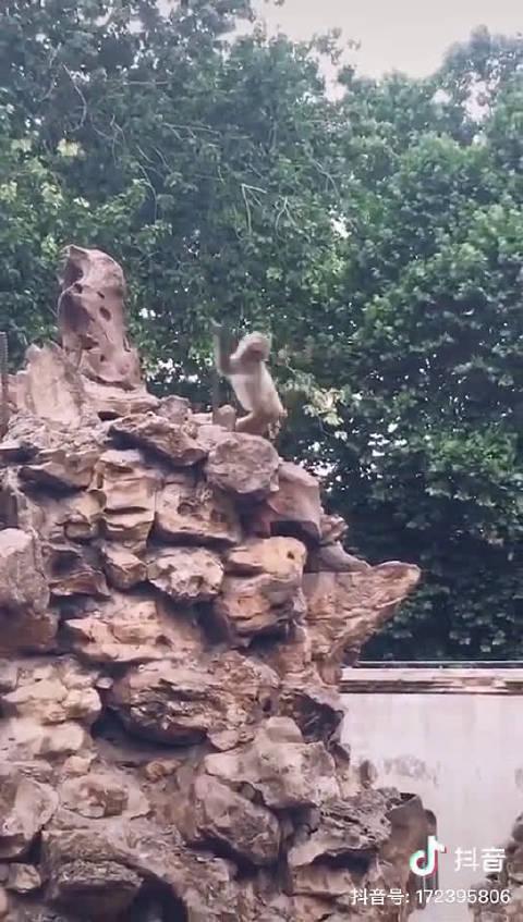 平顶山动物园一只快乐的小猴
