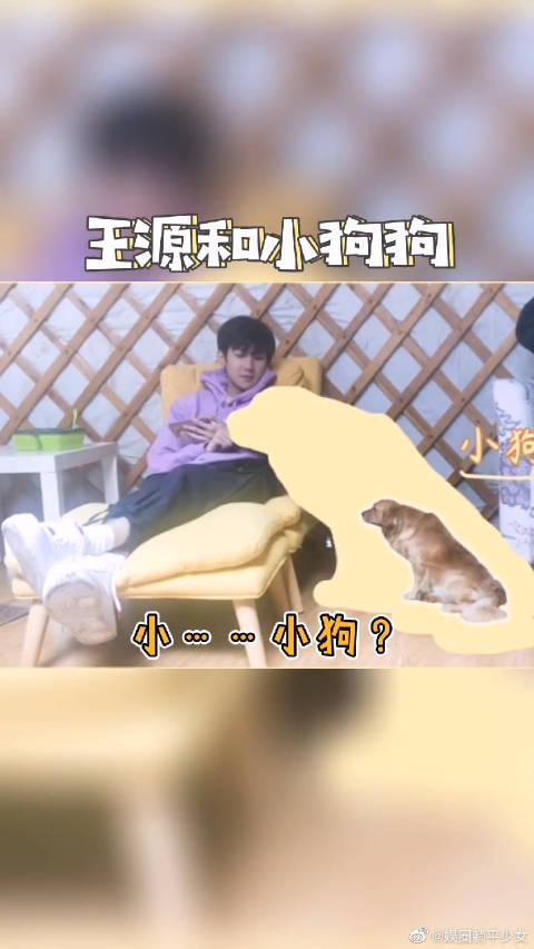 王源和小狗狗 金毛在你眼里都是小狗狗吗? 源源真是个小可爱呢!