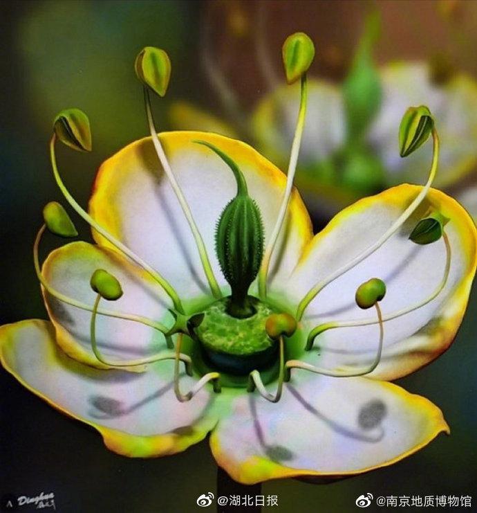 古生物学家发现1500万年前奇特花朵 :长约3毫米……
