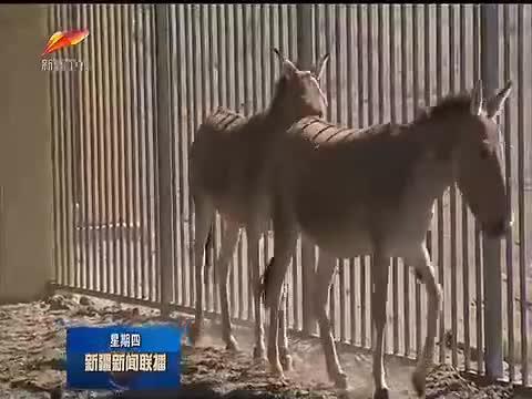 陈全国在卡拉麦里山有蹄类野生动物自然保护区和准东经济技术开发区调研时强调 深入学习贯彻第三次中央新疆工作座谈会精神