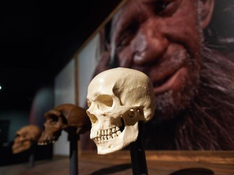 10万年前的一次交配,人类Y染色体占了上风,取代了尼安德特人