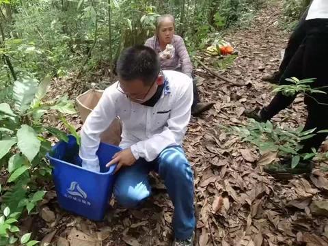 大娘深山捡红蘑菇,一天收入1000元,比干农活强多了,真开心