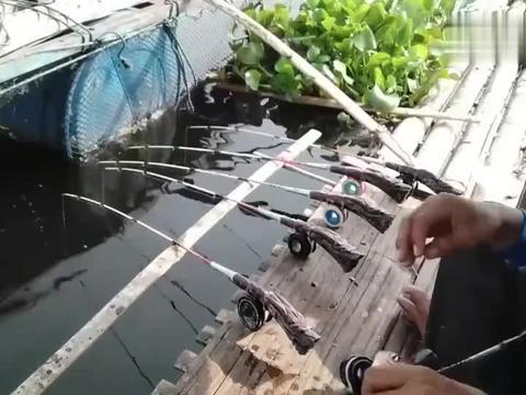 钓鱼:网箱旁边鱼情不错,放了很多根钓竿!