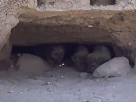 男子听到山洞传来莫名其妙的声音,看清楚后立马报警!