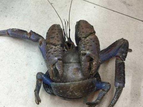 男子在庄稼地里抓到一只螃蟹,听到村长的这句话,令他尴尬不已