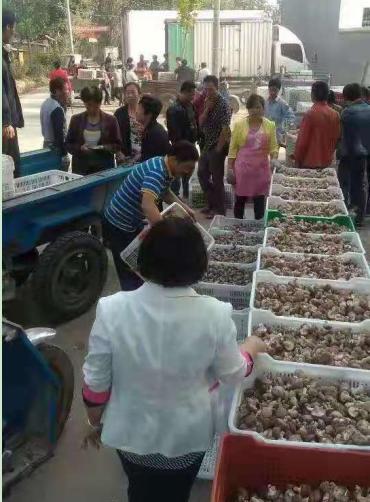 西峡县骏河镇马:发财不忘贫下中富