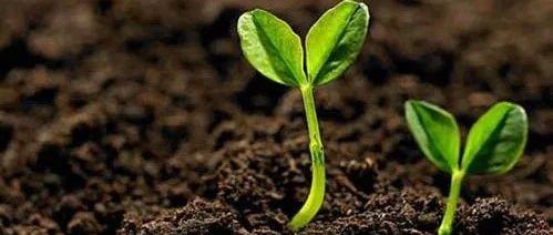 乡村微课堂 | 蔬菜定植时采取这三个措施,可以缩短秧苗缓苗期