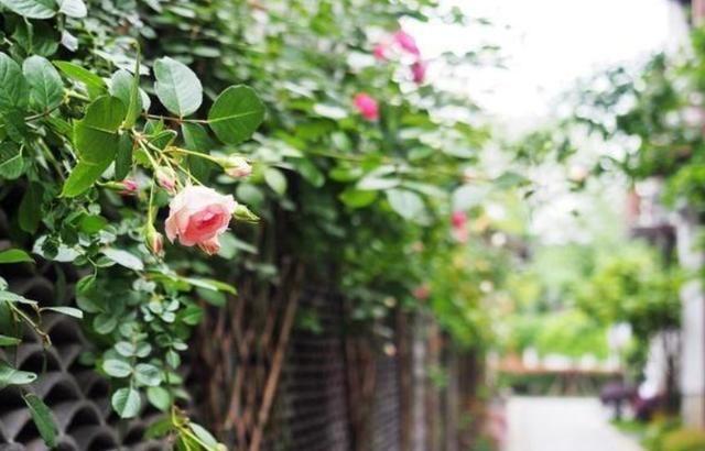 一条隐藏在秦淮河边的美丽老街 比丽江还平静