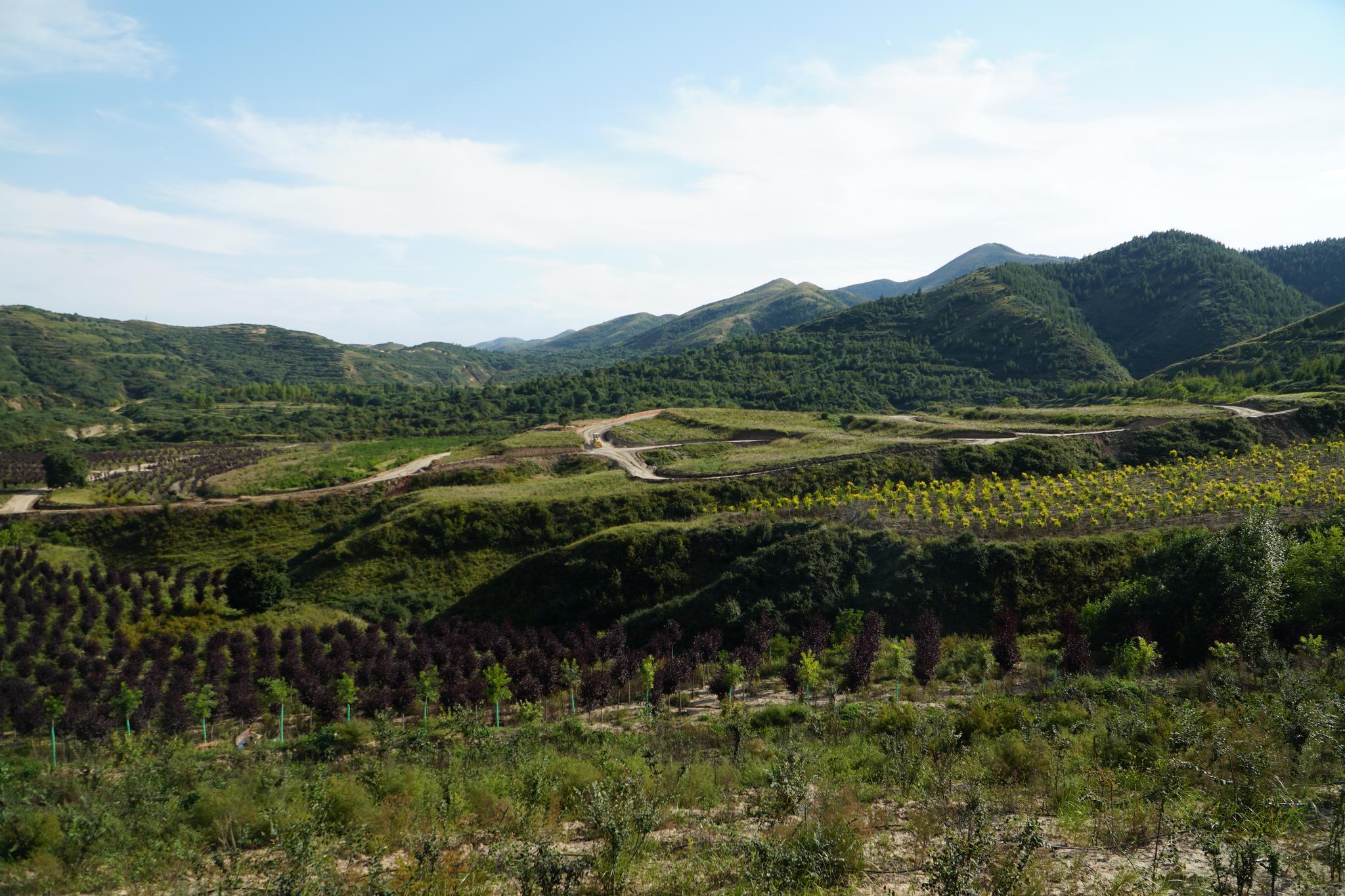 彭阳县农业产业化发展中的金融扶贫