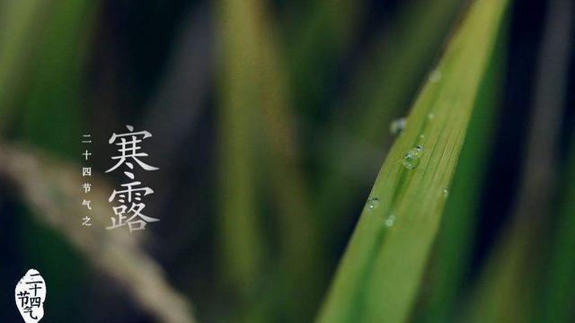 """今日寒露 郑州的秋天""""完了""""?"""