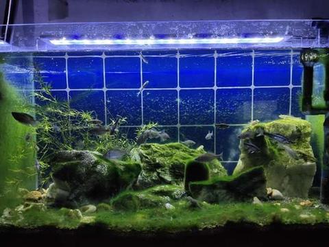 已经铺满藻类的原生鱼缸,敢不敢把过滤撤掉,根本不需要呢?