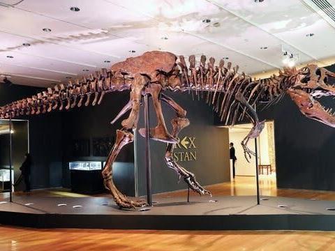 全球最著名霸王龙化石拍出3180万美元,引古生物学家担忧