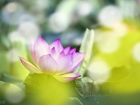 心灵禅语:随缘不是得过且过,因循苟且,而是尽人事听天命