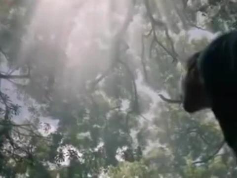 侏罗纪世界3导演宣布拍摄暂停 因新冠疫情影响