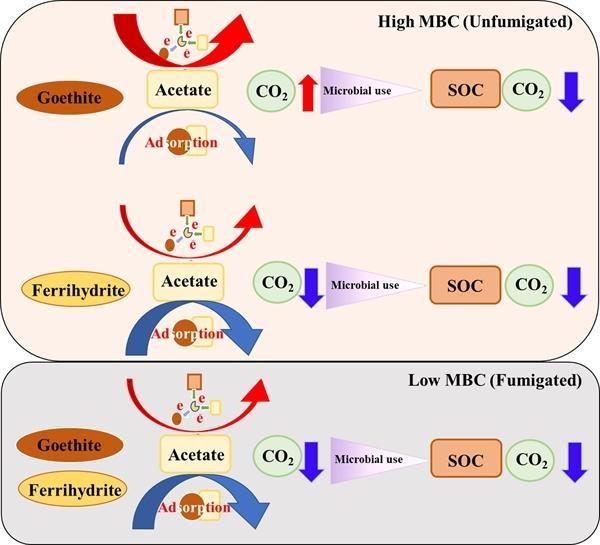 不同微生物生物量水稻土有机碳矿化对铁氧化物的响应研究获进展