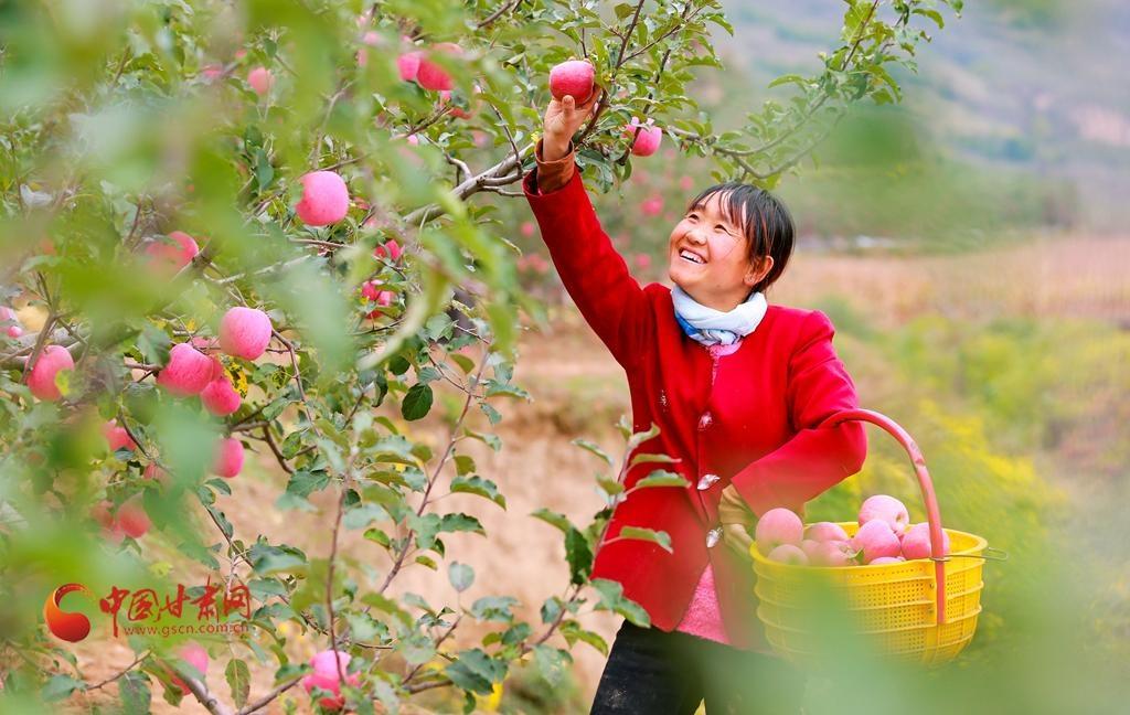 甘肅靜寧:蘋果枝繁葉茂 風光旖旎