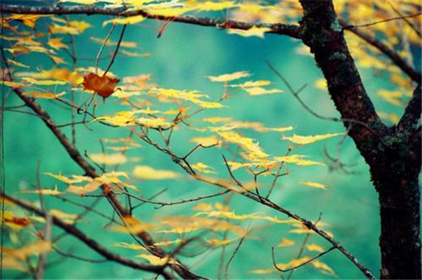 在日本,看秋蝉的伤逝之美