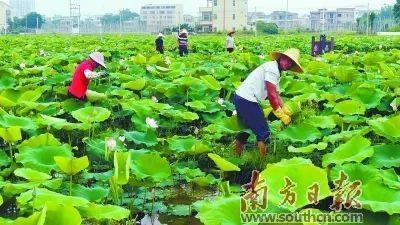 特色成长 打造绿色美丽的新农村!惠州博