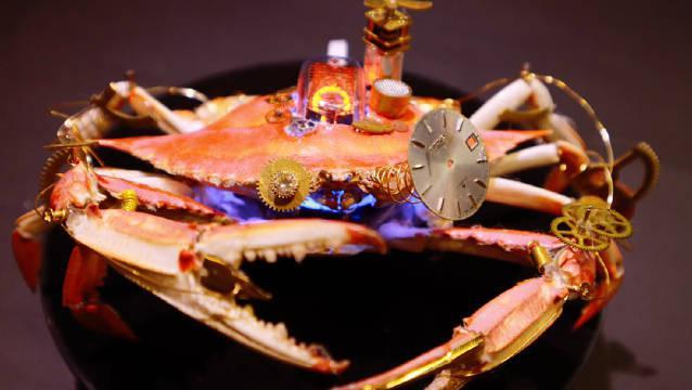 螃蟹:我很方……