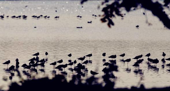 南沙湿地观鸟 十九涌尝海鲜