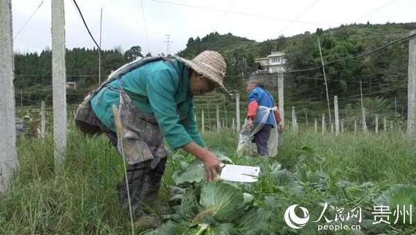 im体育首页:毕节金沙:工业基地忙生产 农民增收 全面建设小康社会