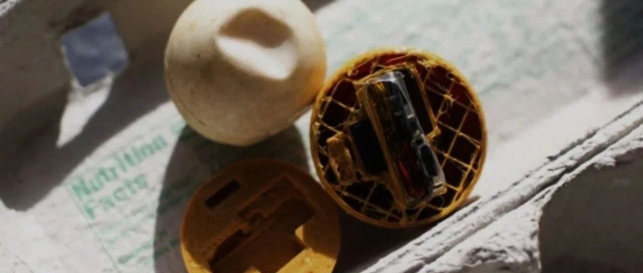 """女博士用3D打印""""卧底""""海龟蛋,装GPS骗过偷猎者,还揭发了137公里的非法贸易链"""