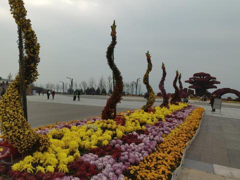 太原晋阳湖公园广场,各种花卉琳琅满目,近期可以观湖赏花