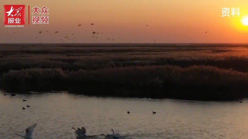 走进鸟类天堂——黄河三角洲国家级自然保护区