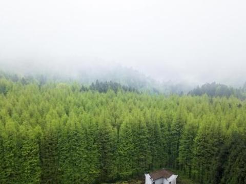 悄然赶超金佛山,重庆南川这个景区凭借一个景,成为游客新宠儿