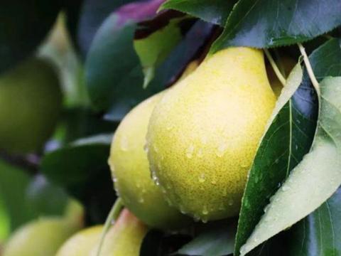秋燥吃什么可以润燥?3种食物少不了,都是时令蔬菜水果