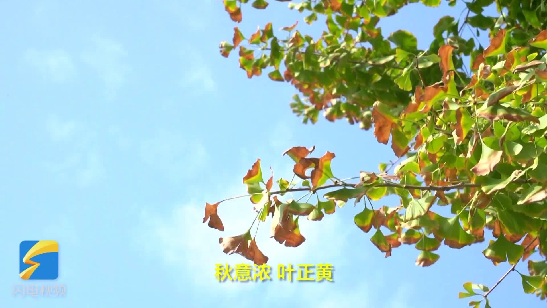 德州武城:碧云天黄叶地,多彩秋色别错过 .齐鲁网