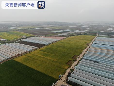 【关注】这次是新品种!又一块袁隆平超级杂交稻实验田在蒙自测产图片