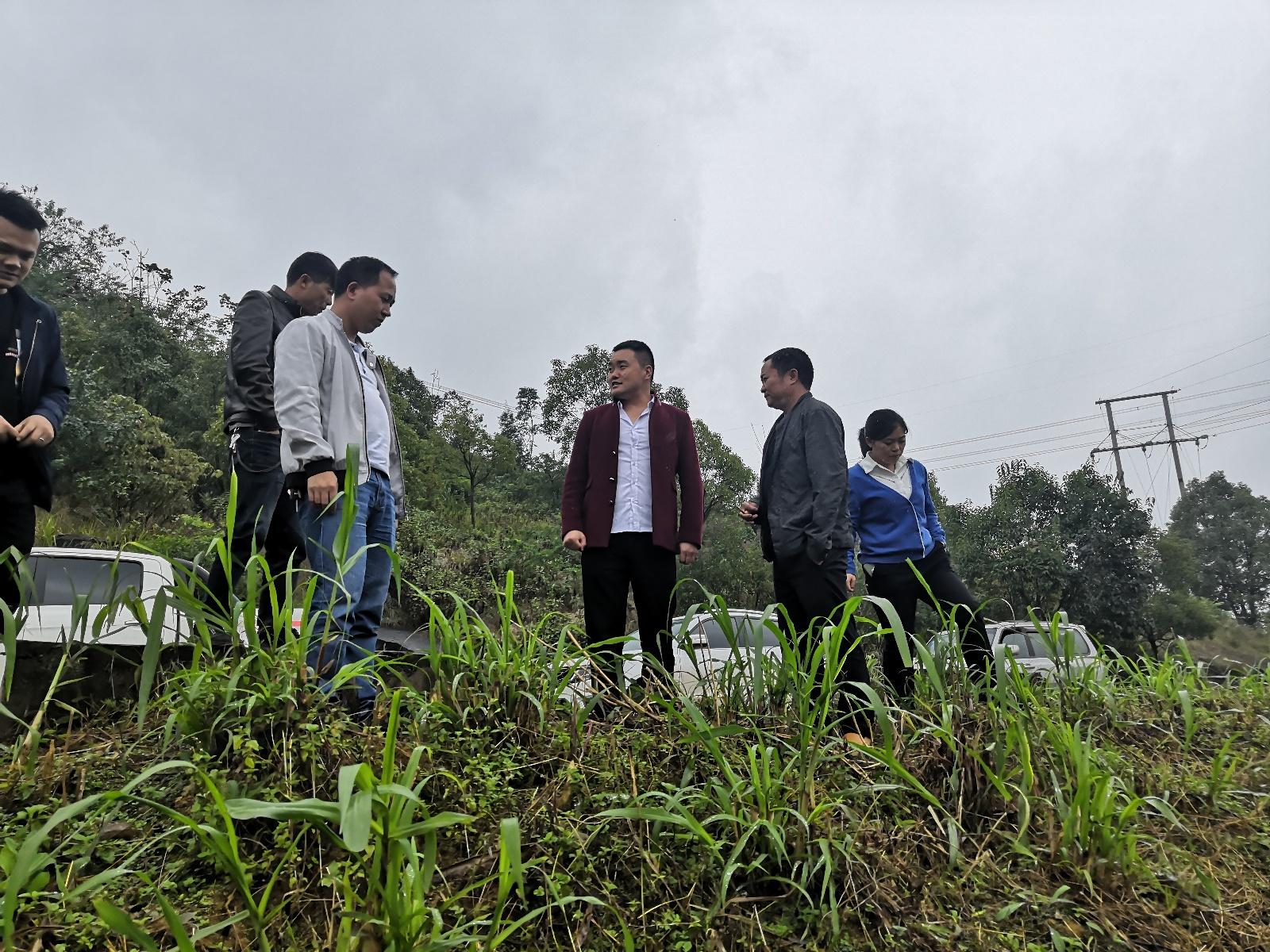 省草推站、省草业研究所专家赴关岭自治县指导草牧业工作