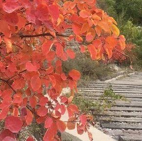 山体塌方隐患排查,崛围山赏红叶需绕行