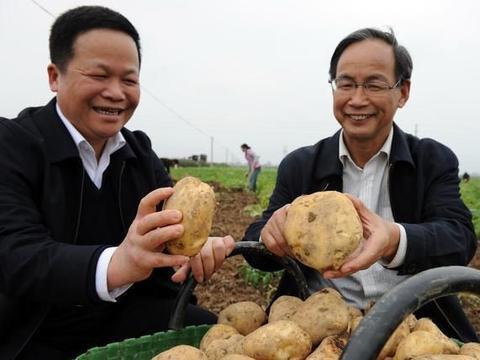 菜价大跌,土豆3毛没人要,葱姜价格却暴涨,今后菜价行情如何?