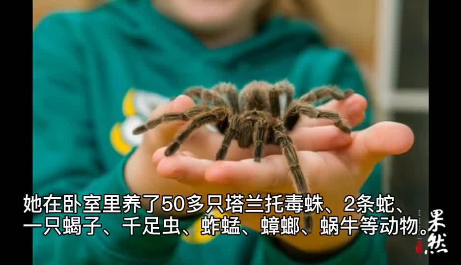 果然视频|8岁英国小女孩,在卧室养蜘蛛、蛇、蝎子、千足虫…