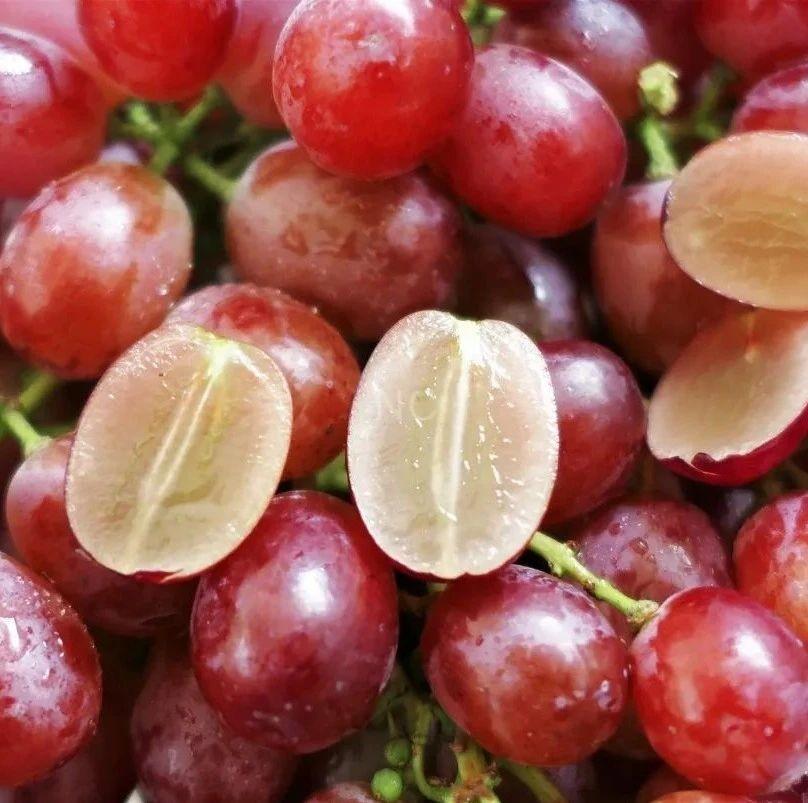 嘭嘭Q脆+20°蜜甜,无籽、不吐皮的红提真过瘾!3斤只要58元!