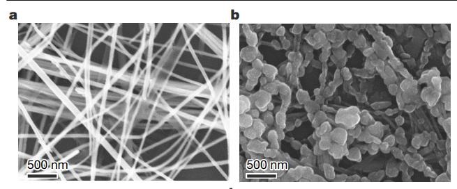 经过处理(左)和未经处理(右)的铜纳米线在48小时、80℃氧化后的扫描电子显微镜图像