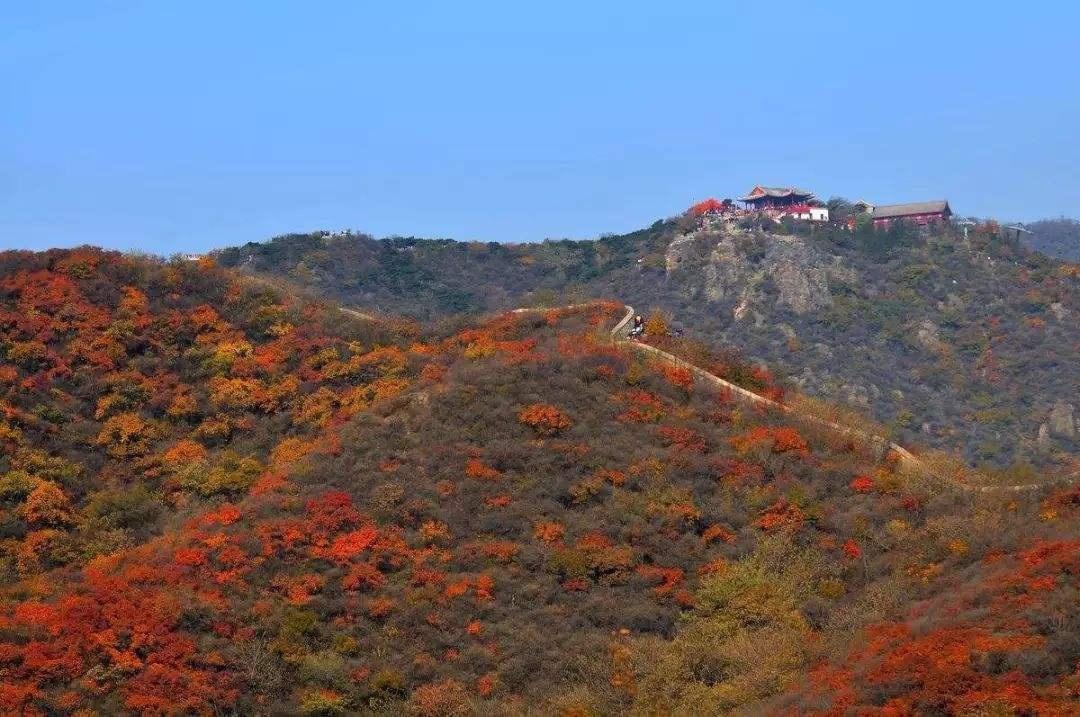 香山红叶观赏期6个高峰日部分道路临时管制