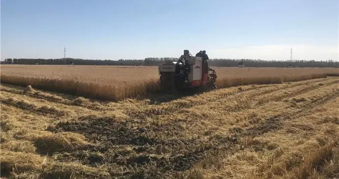 吉林市已完成粮食作物收获面积476.5万亩