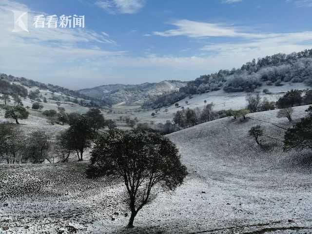 当雪遇上草原 就是这么妖娆!图片