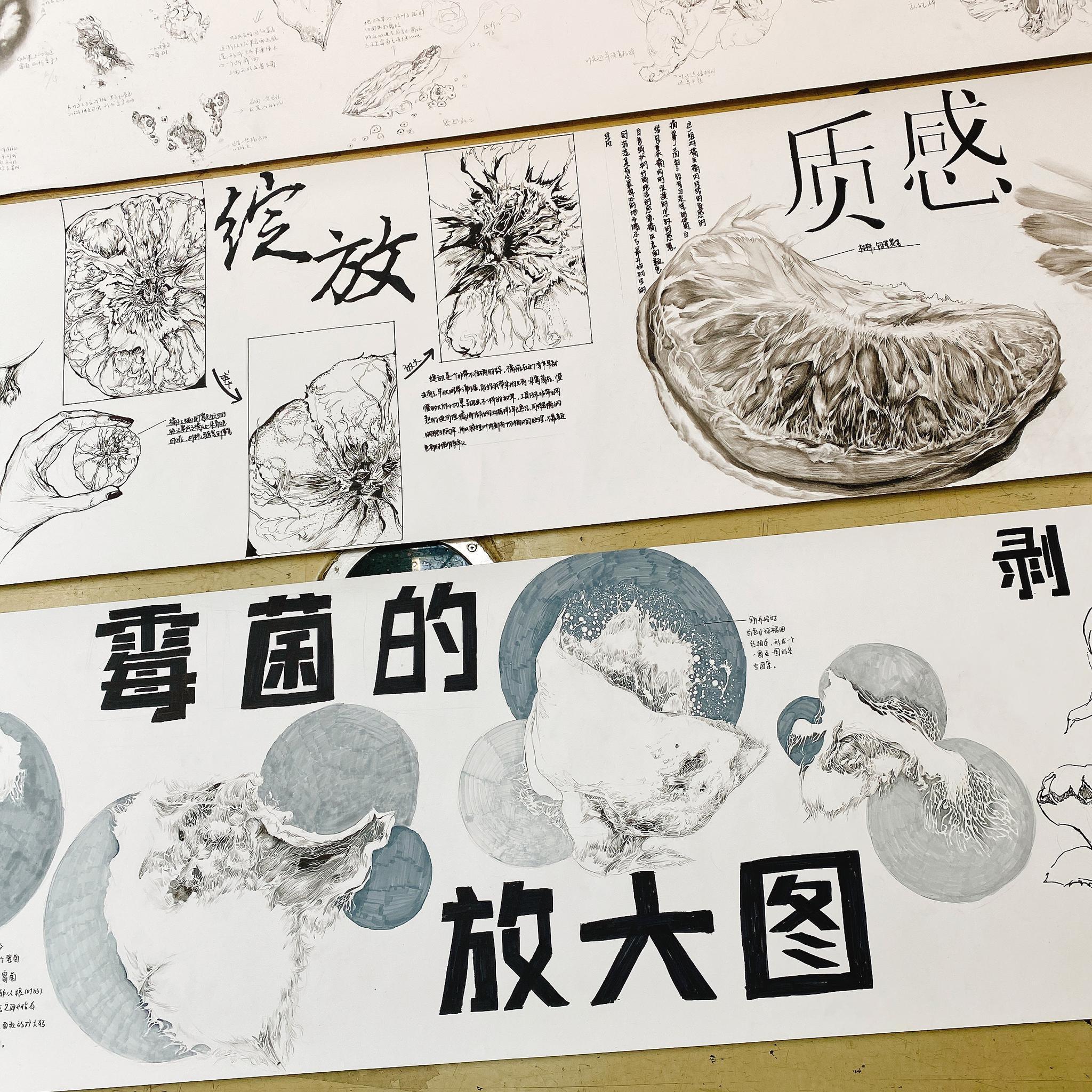 """作业也疯狂:同济大学新生用""""十米长卷""""记录自然物象变化"""