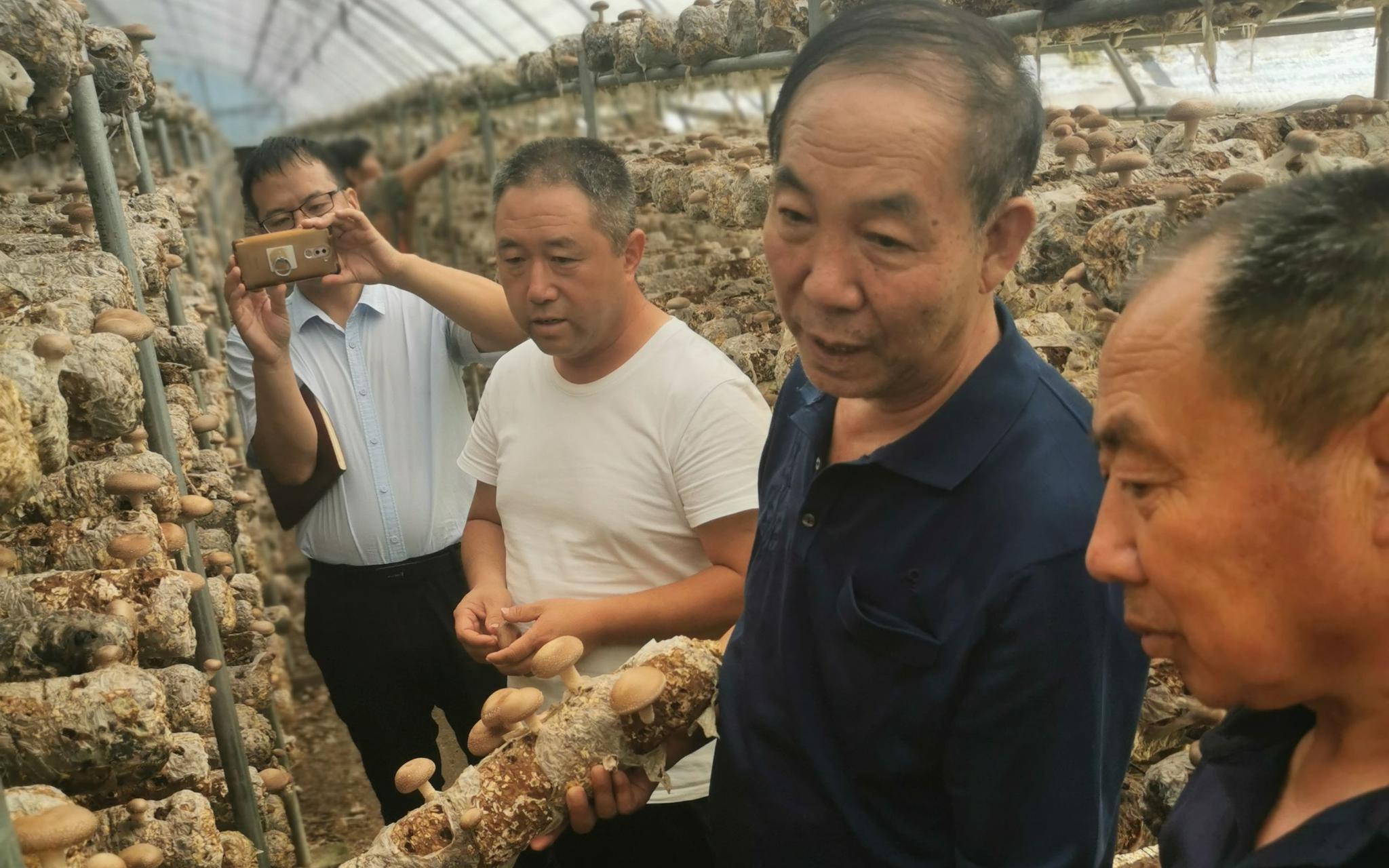 """侯桂森:把食用菌带进贫困县的""""乡土教授""""图片"""