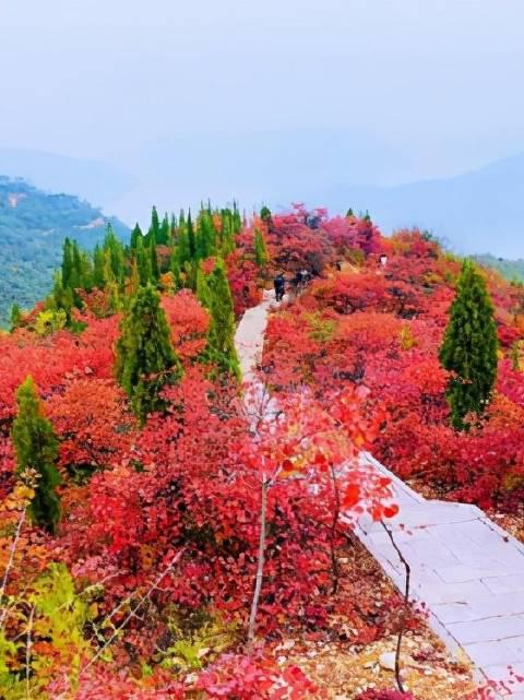 秋日的荆紫仙山,别有一番韵味,看漫山红遍,层林尽染……