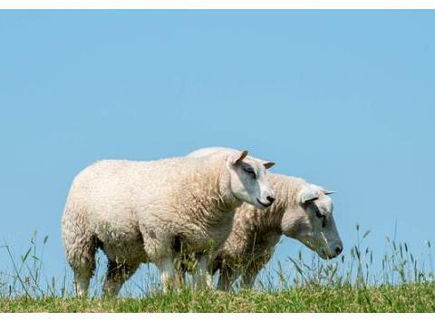 属羊人:好运来了!六年才出现一次的红双喜来袭,属羊人快来接!
