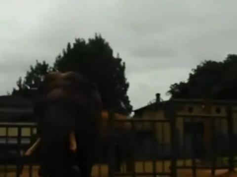 昆明动物园内一游客将包裹着塑料袋的苹果扔给大象,导致大象误食