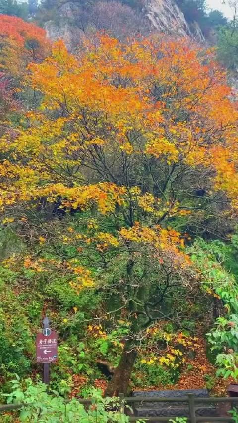 老君山秋景,一年四季不同风景